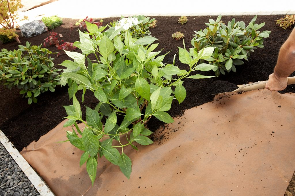 Projar-Malla-Malas-hierbas