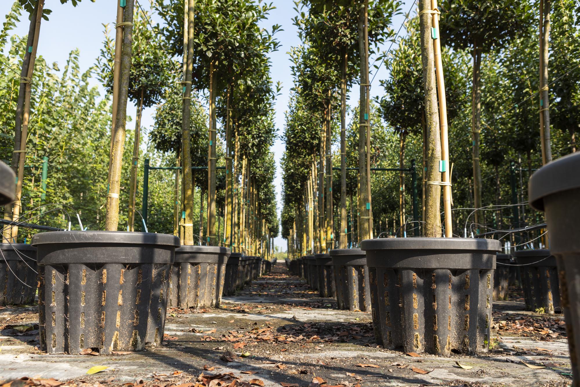jardineria-sils-iberflora