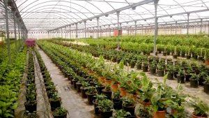 Substrate projar iberflora