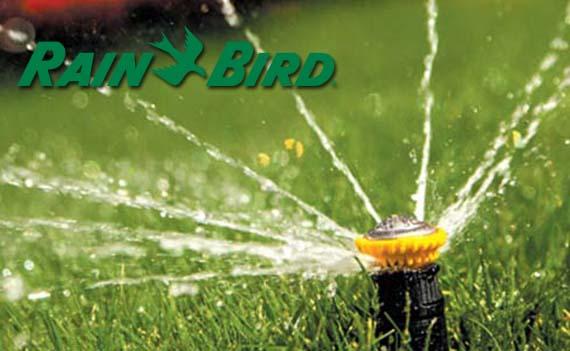 rain-bird-portada
