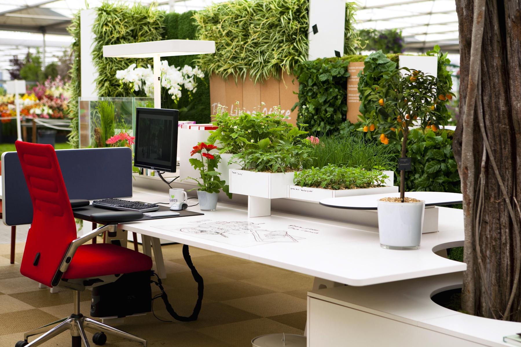 Oficina-Plantas