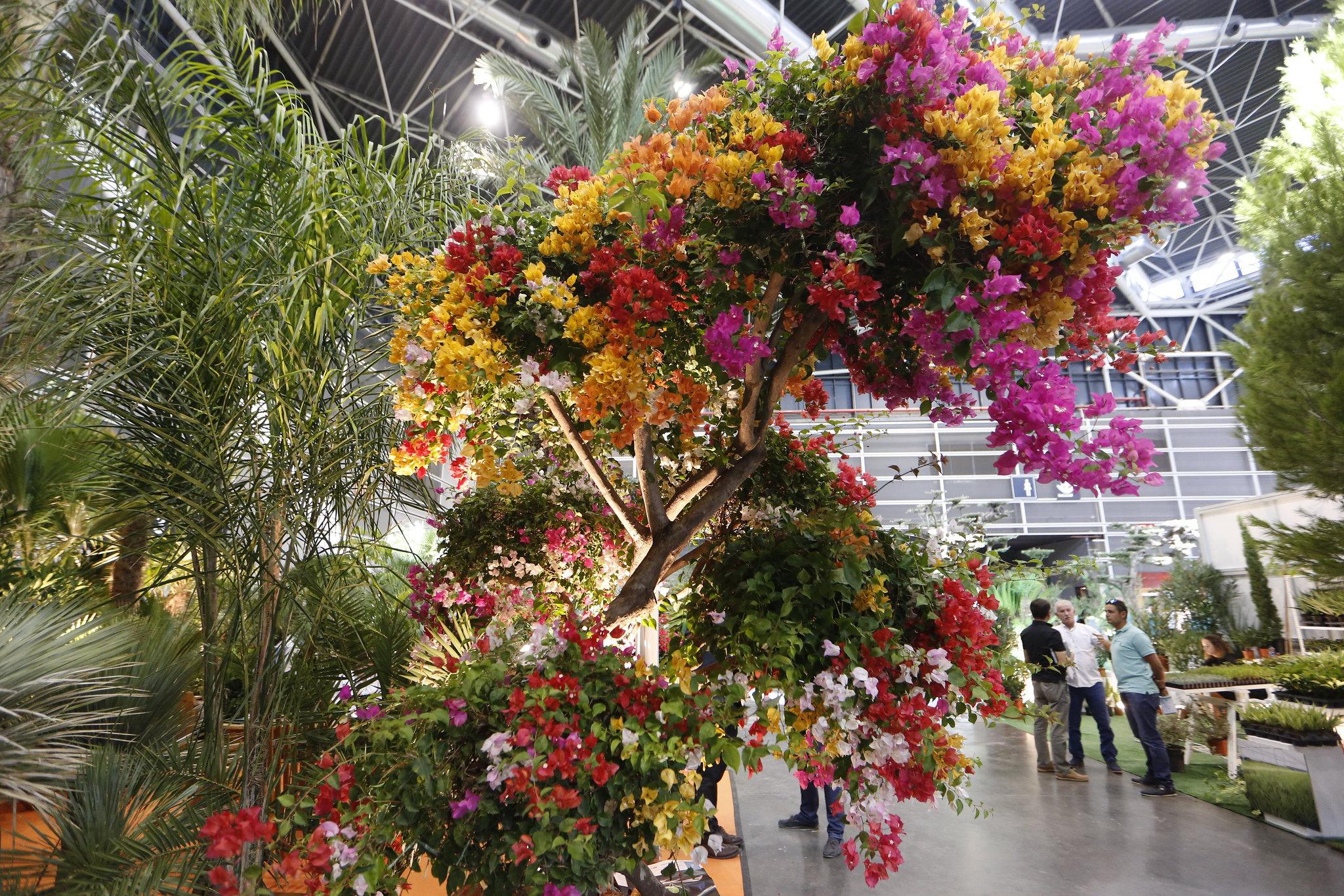premio-nacional-jardineria-feej-iberflora