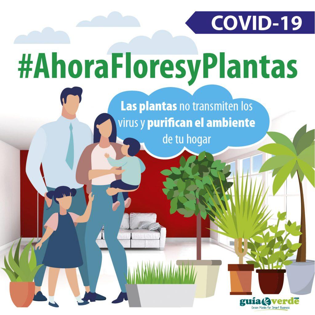 ahorafloresyplantas-iberflora