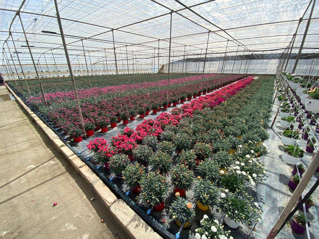 plant-ornamental
