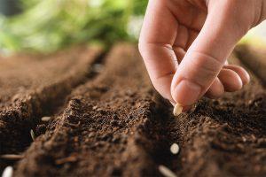 boom-semillas-iberflora-21